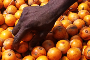 Agbalumo pictures