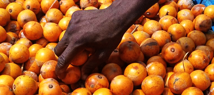 Agbalumo Lowers Blood Sugar – Andrew Marbell