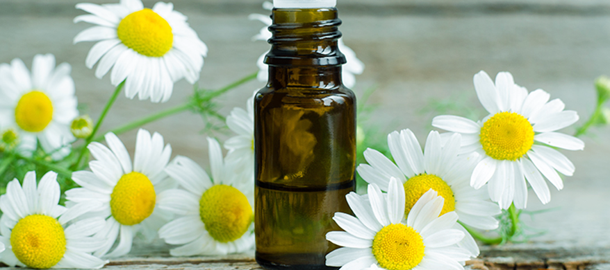 Save money by harnessing these amazing benefits of Chamomile oil