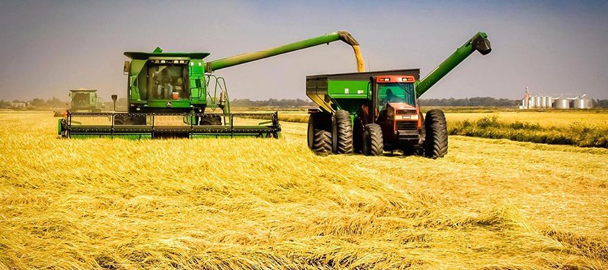 Nigeria Produces Eight Million Metric Tonnes of Rice Yearly