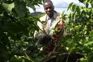 Zimbabwe Coffee returns to top spot