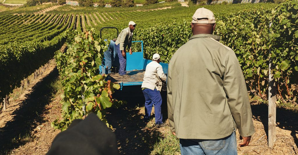 South Africa gears up to take back lands for black farmers